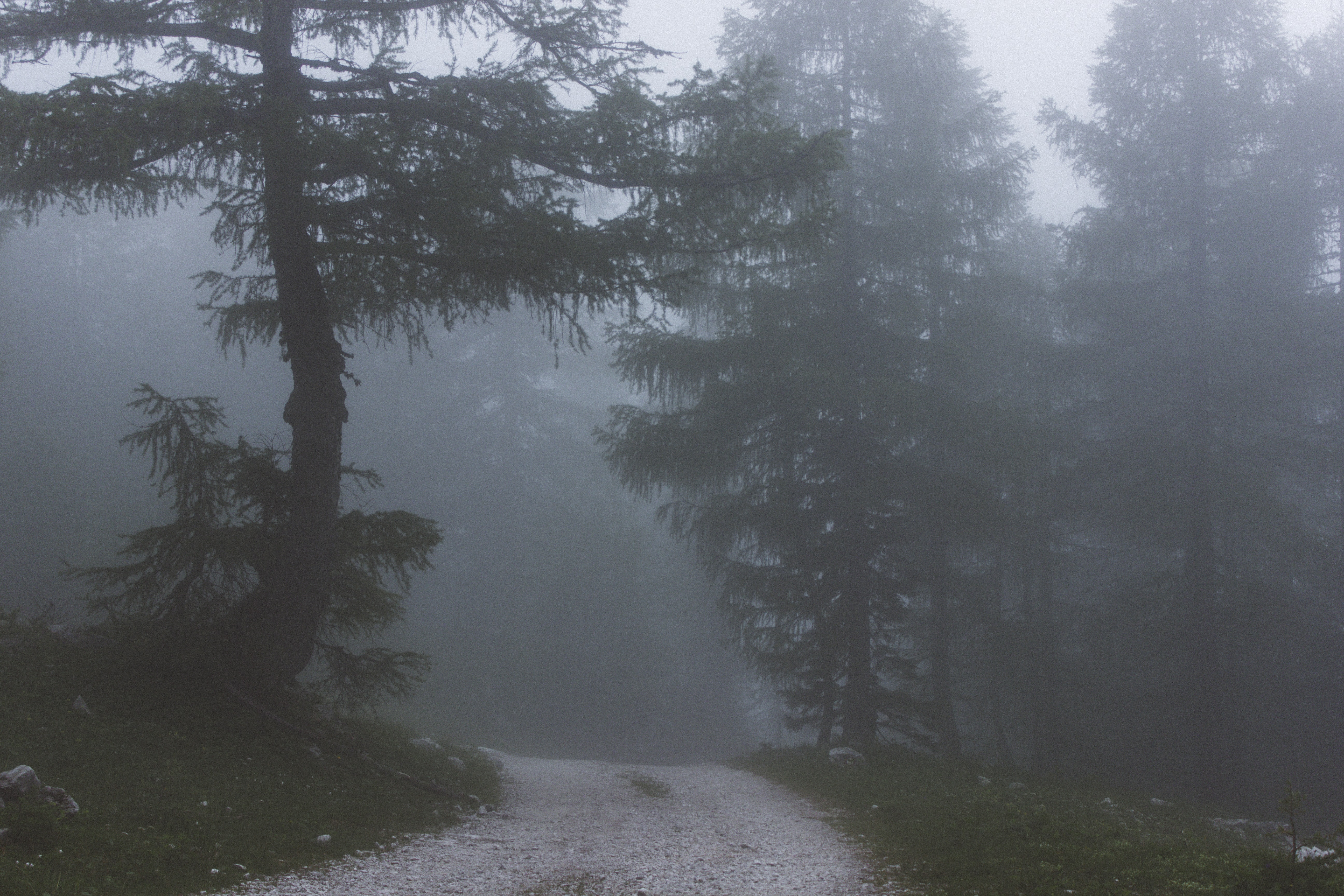 forest surrounded with fog
