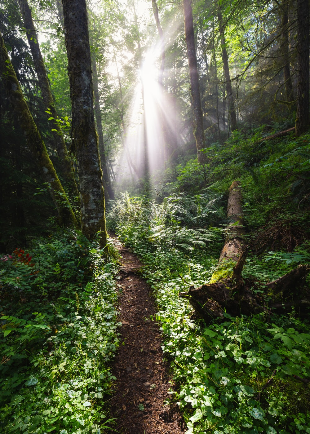 sun shining on forest