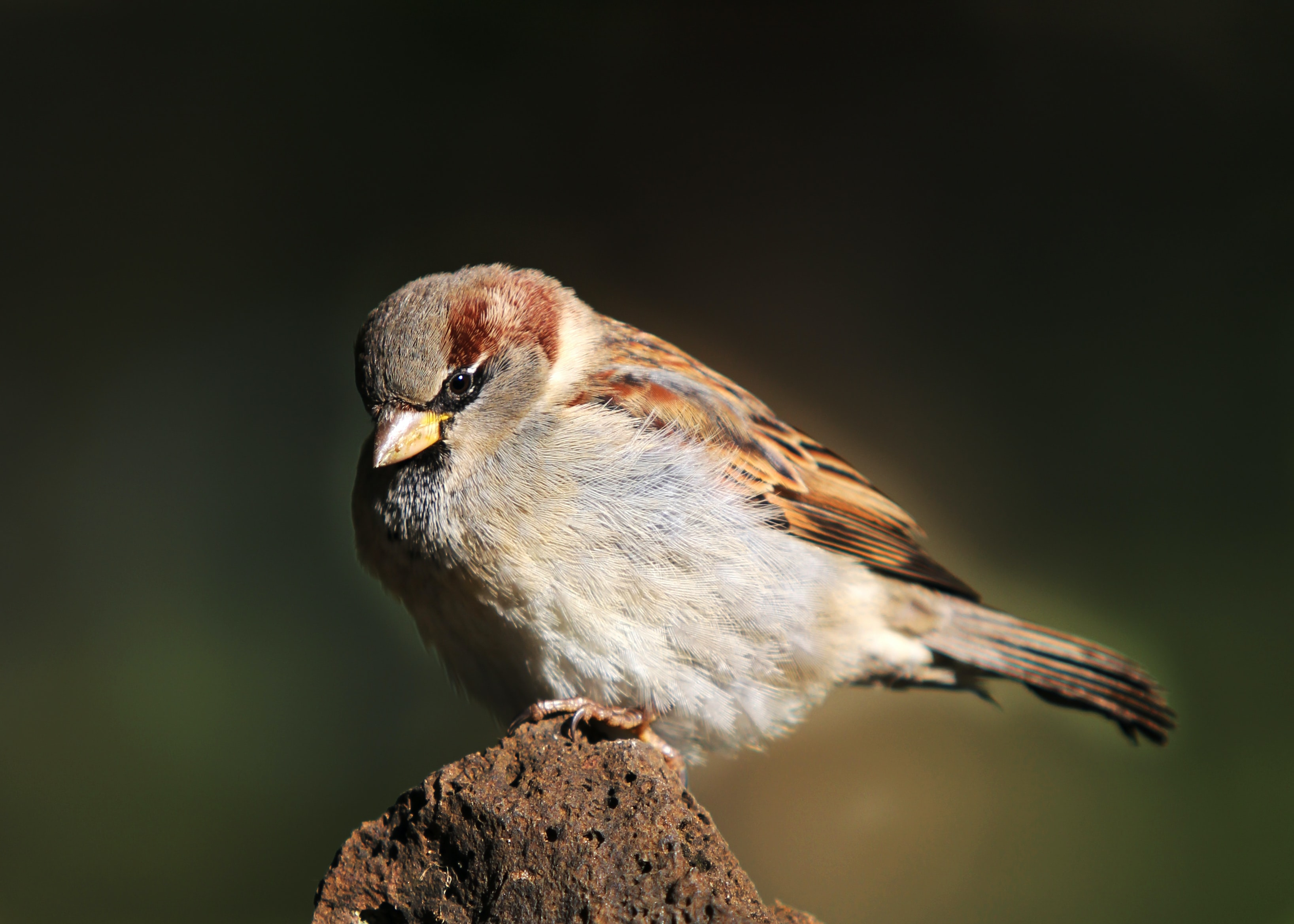 brown and white bird perched on rock in close-up photography