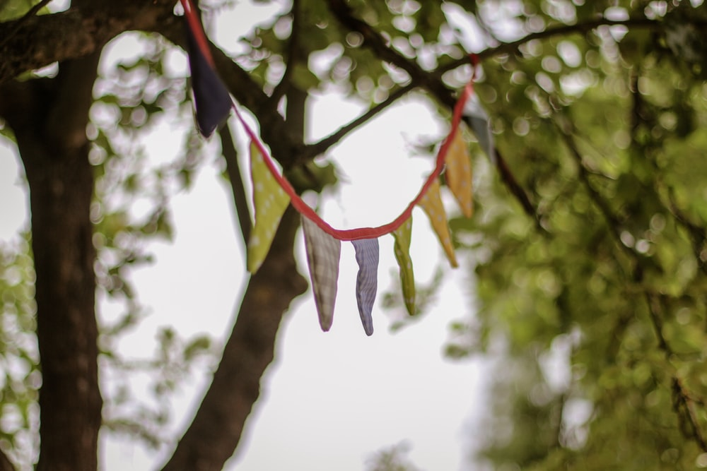 assorted-color buntings tied on tree