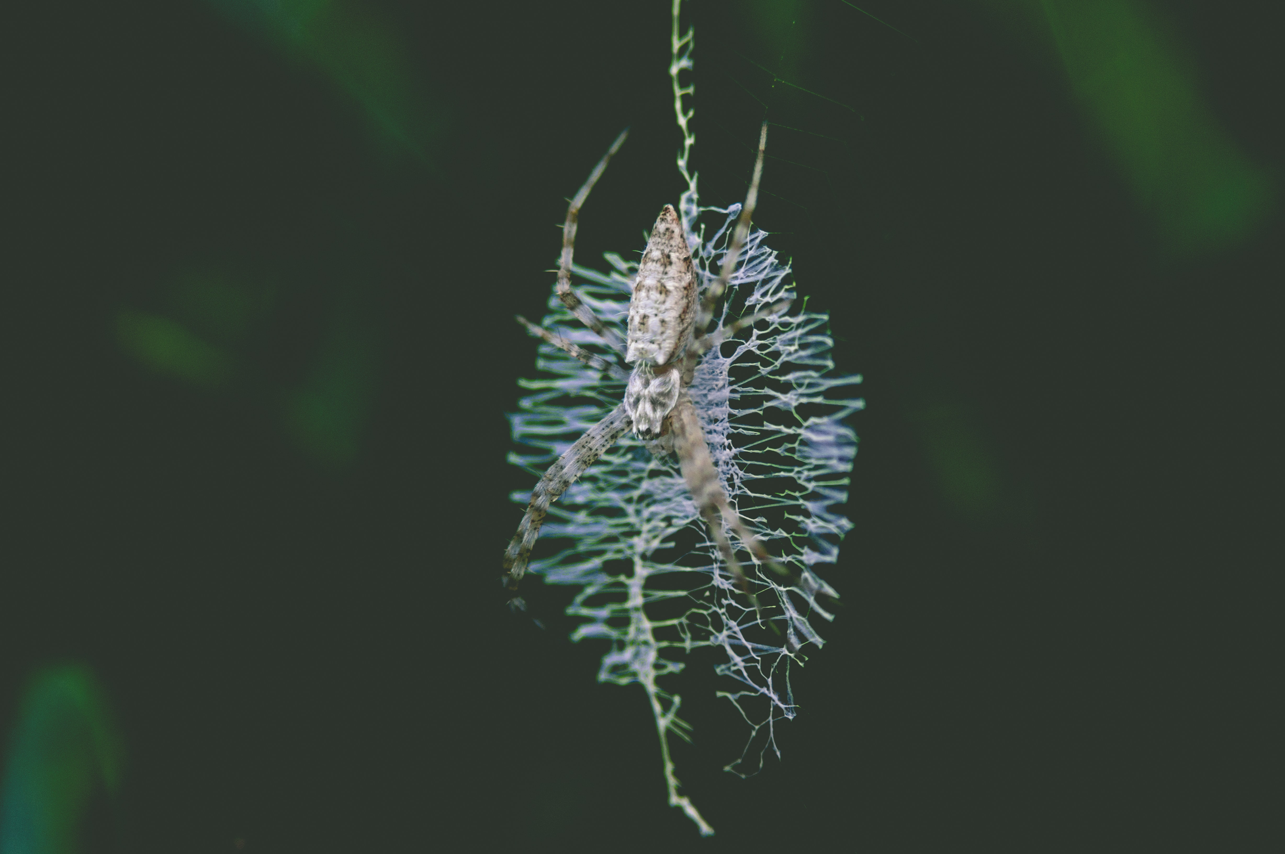 selective focus photography of brown spider on web