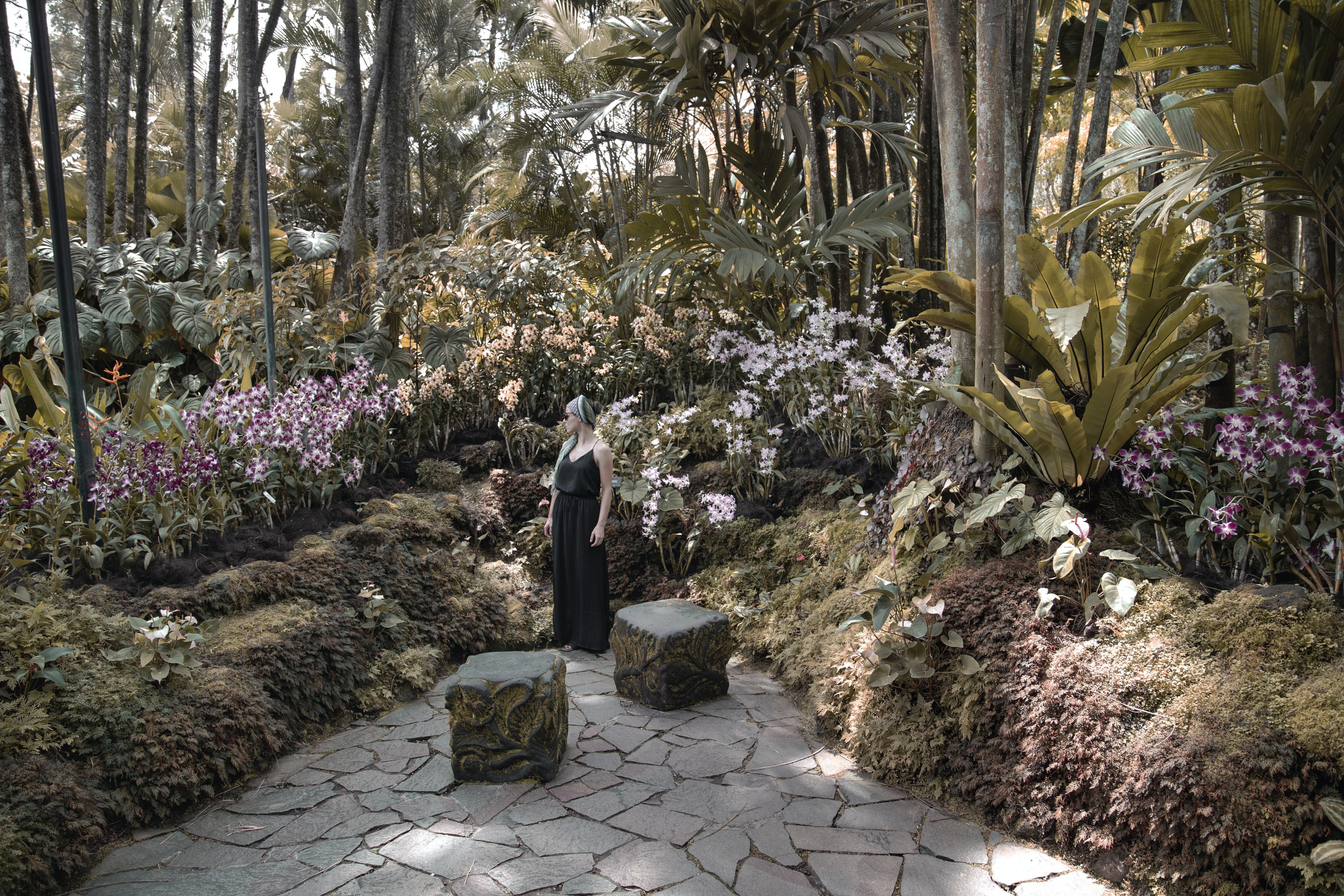 woman in black dress standing near pink flowers