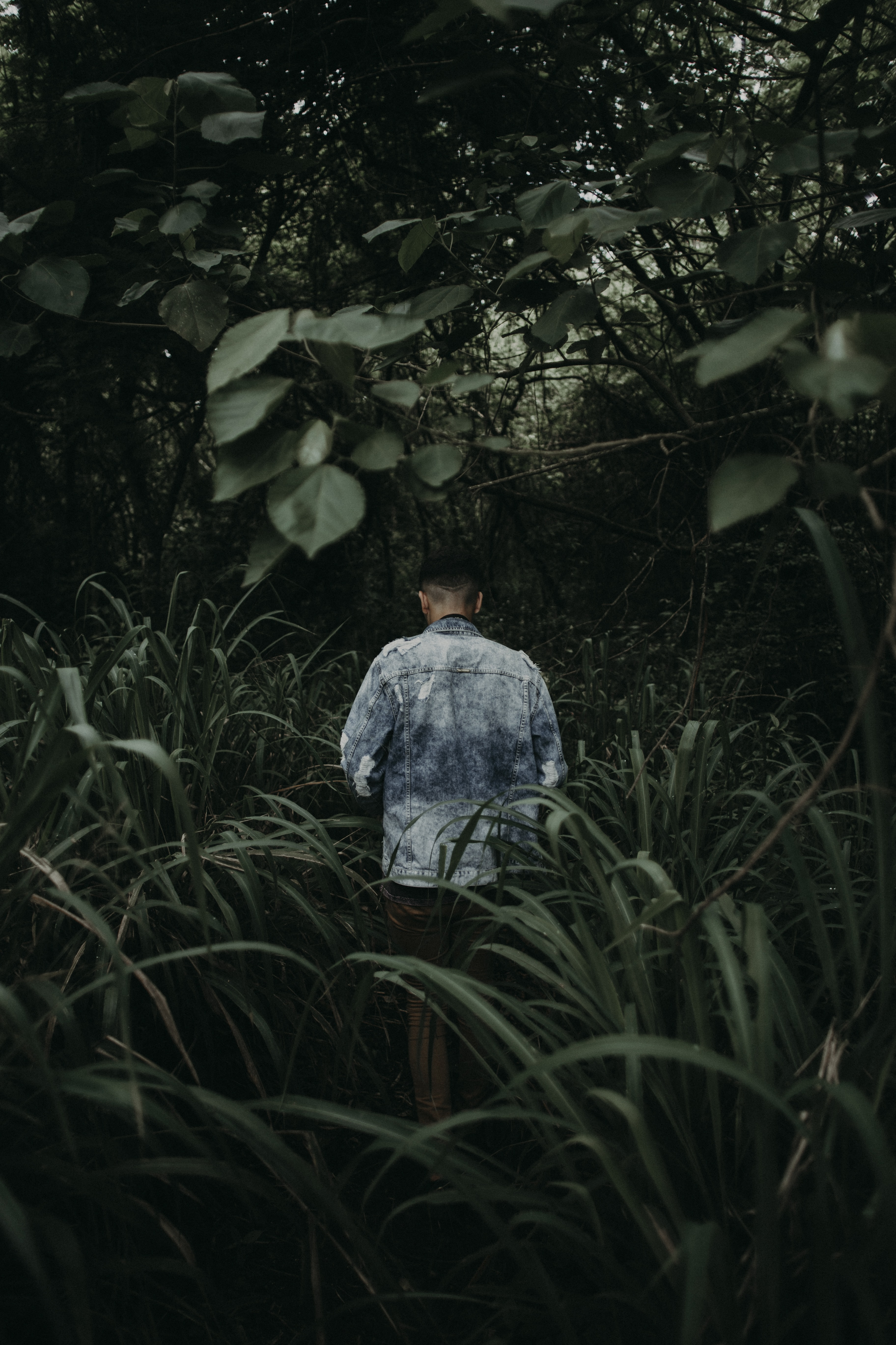 person standing between grass under leaves
