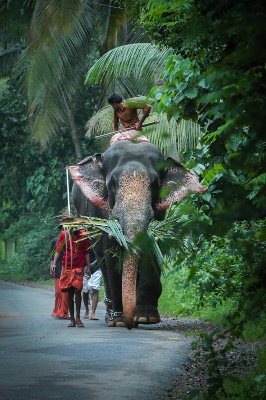 man riding elephant on road
