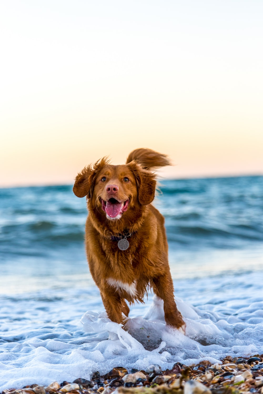 dog running on beach during daytime