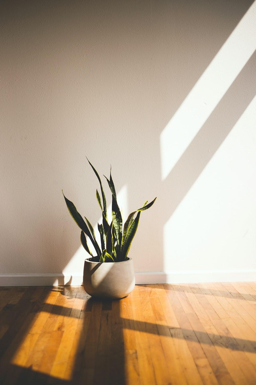 20 free plant images on unsplash. Black Bedroom Furniture Sets. Home Design Ideas