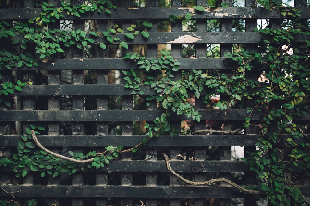 black lattice board