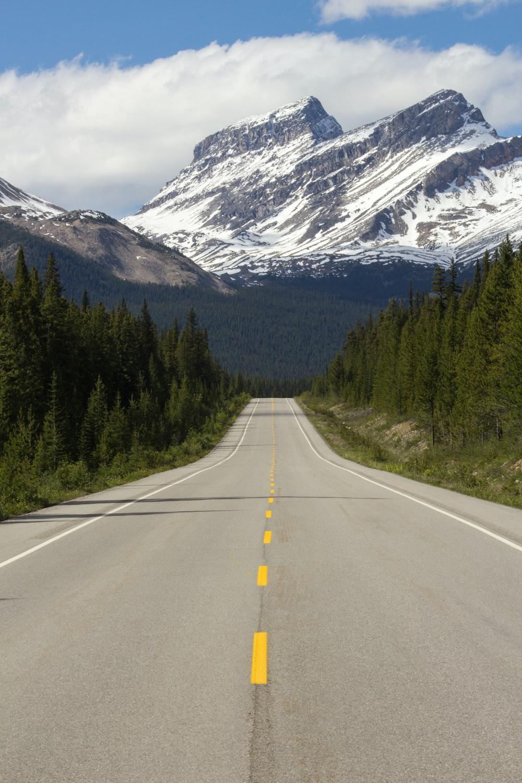 straight road between trees