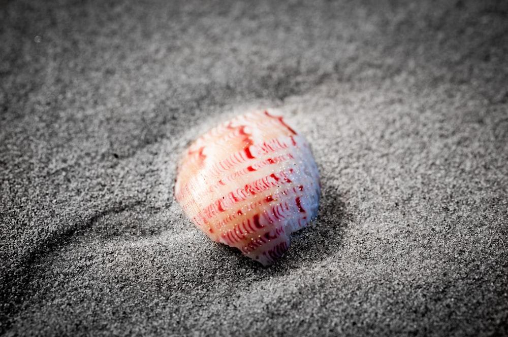 seashell on gray sand