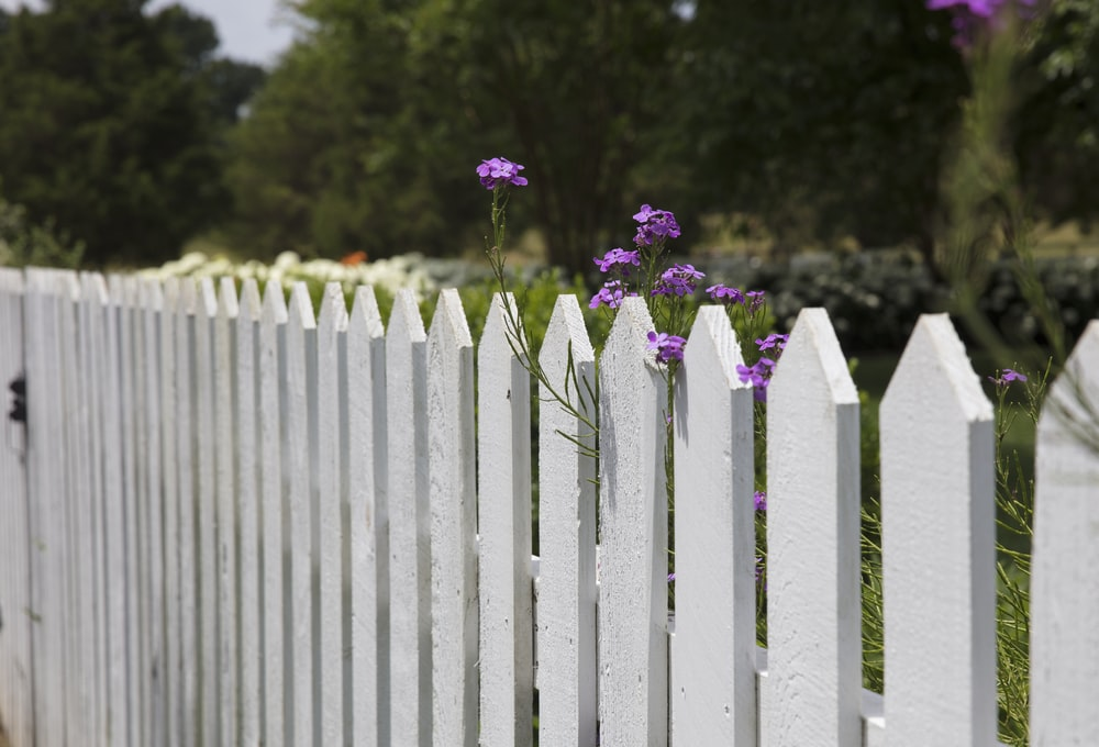 pink petaled flowers blooms near fence