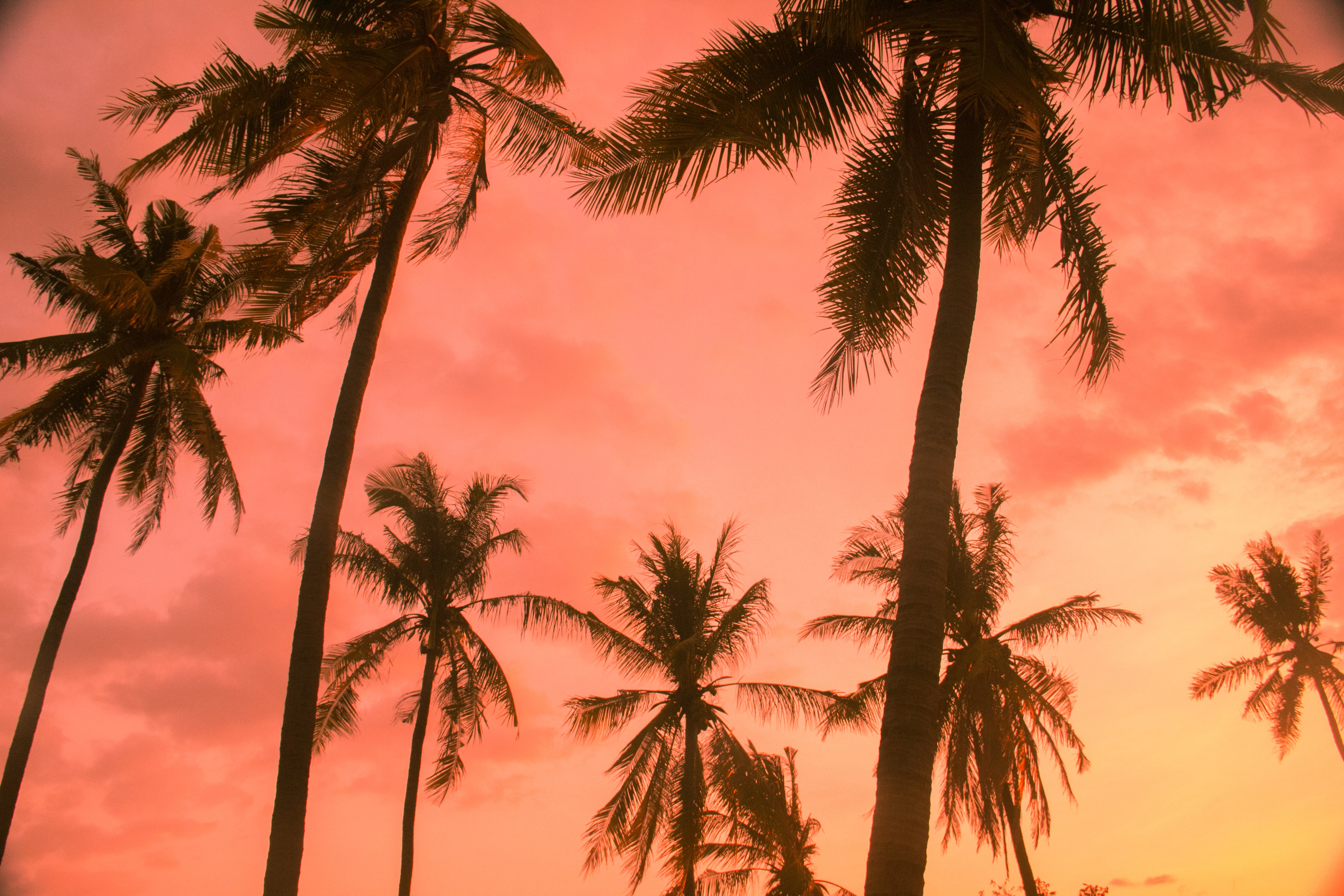 low angle view of palm tree during golden hour