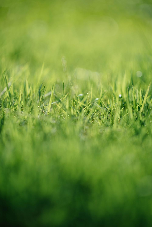 green grass closeup photographr