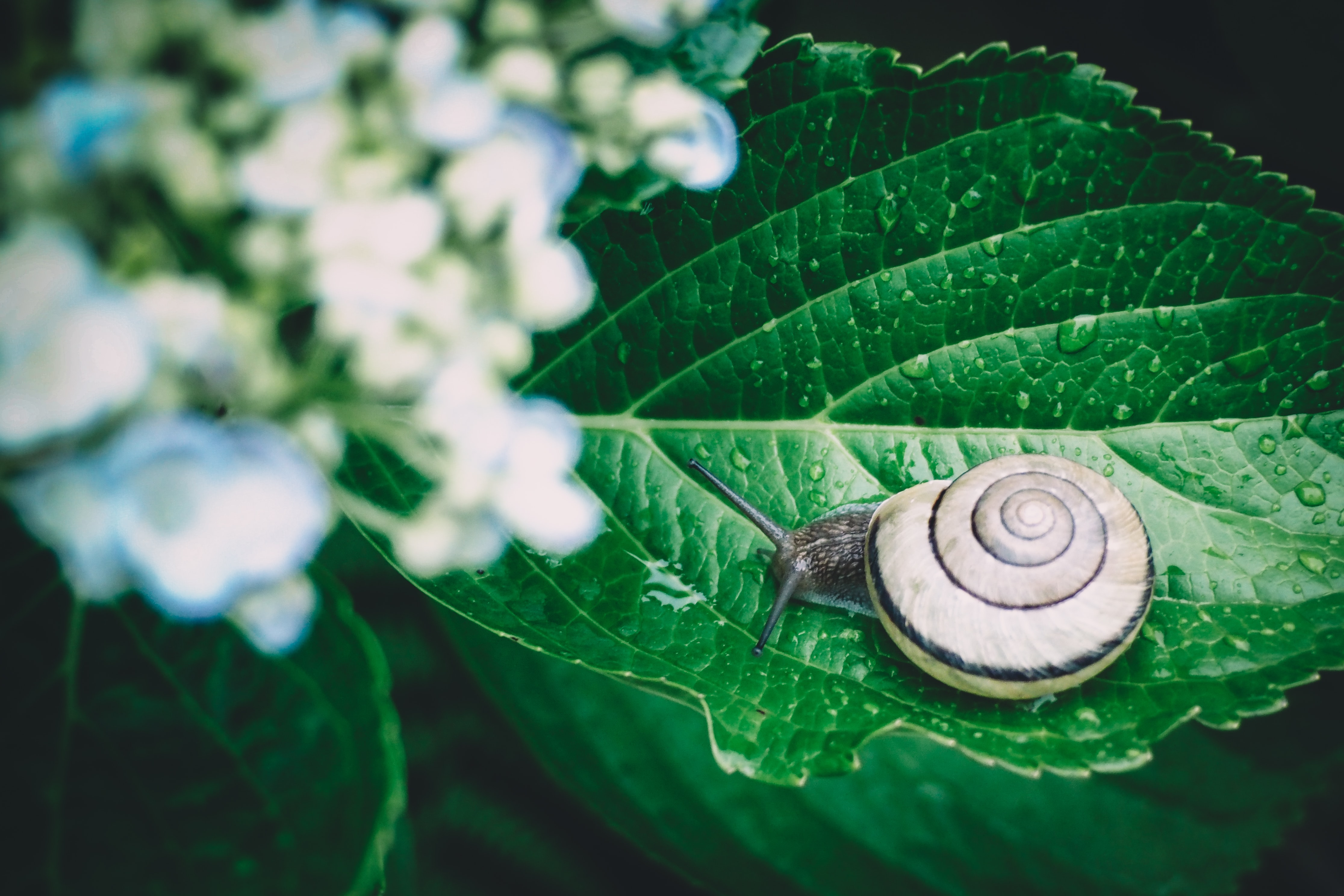selective focus photography of snail on green leafed plant