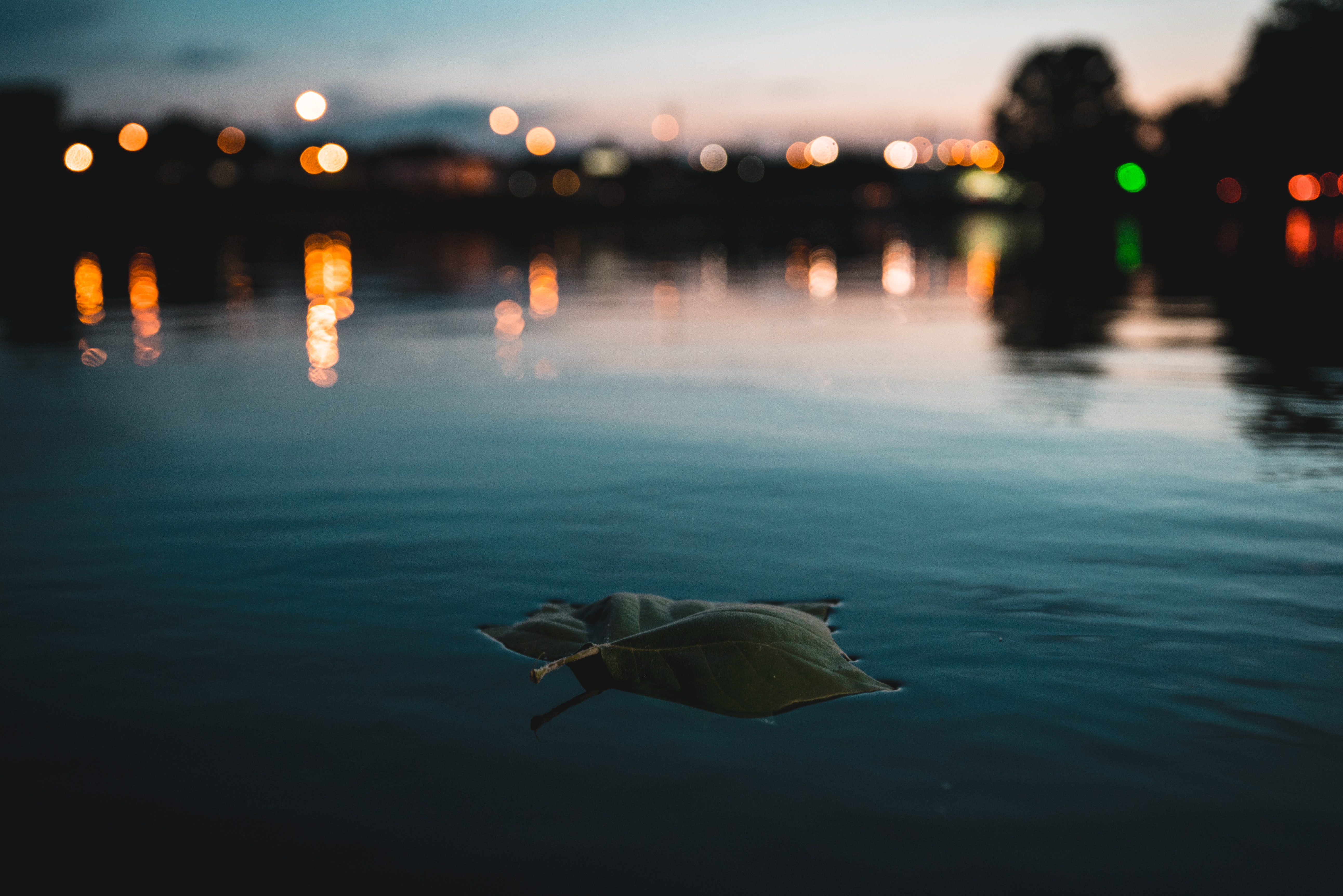 leaf floating on body of water