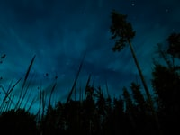 low-angle photography of trees during night