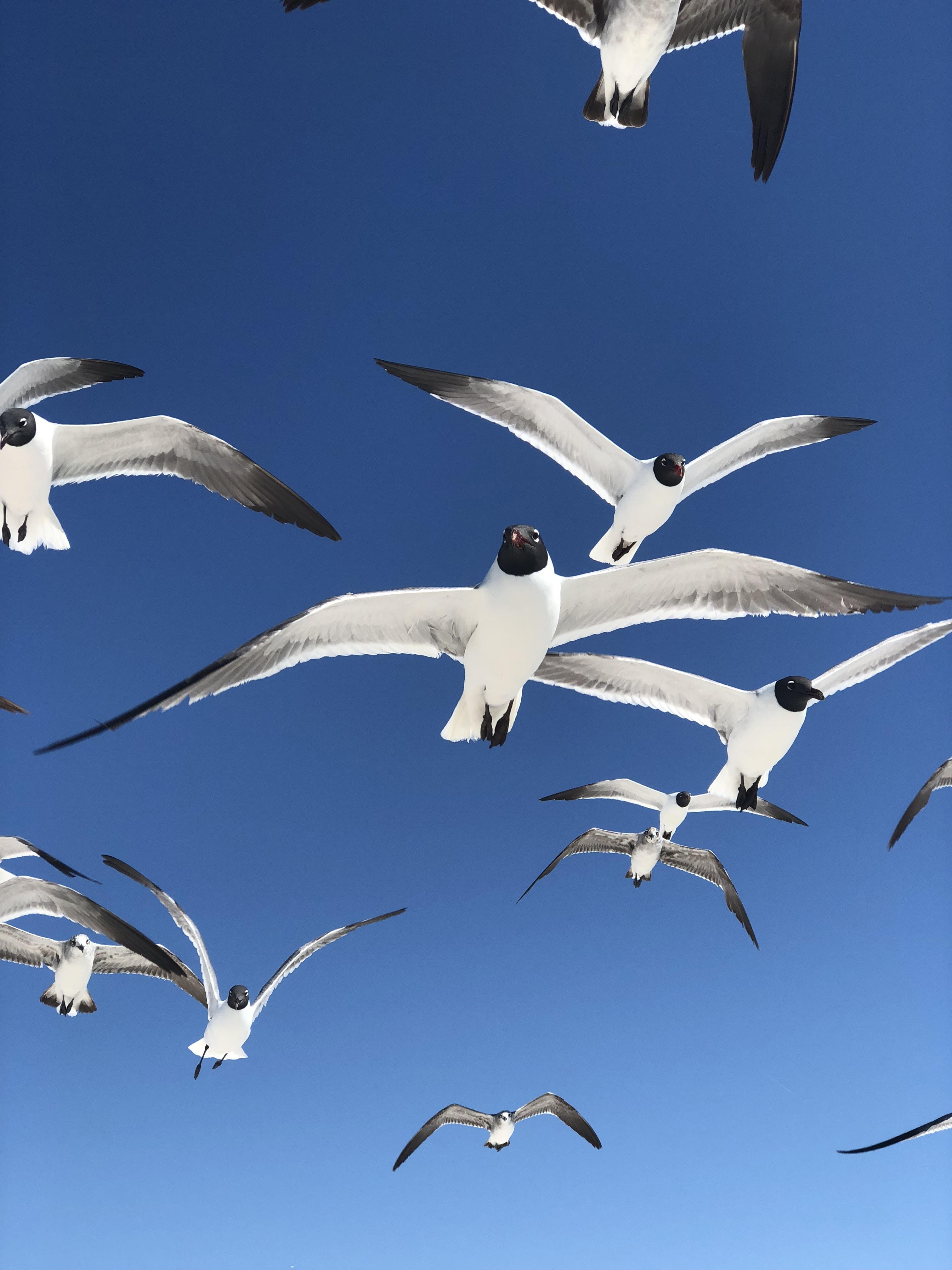 flock of white bird on air