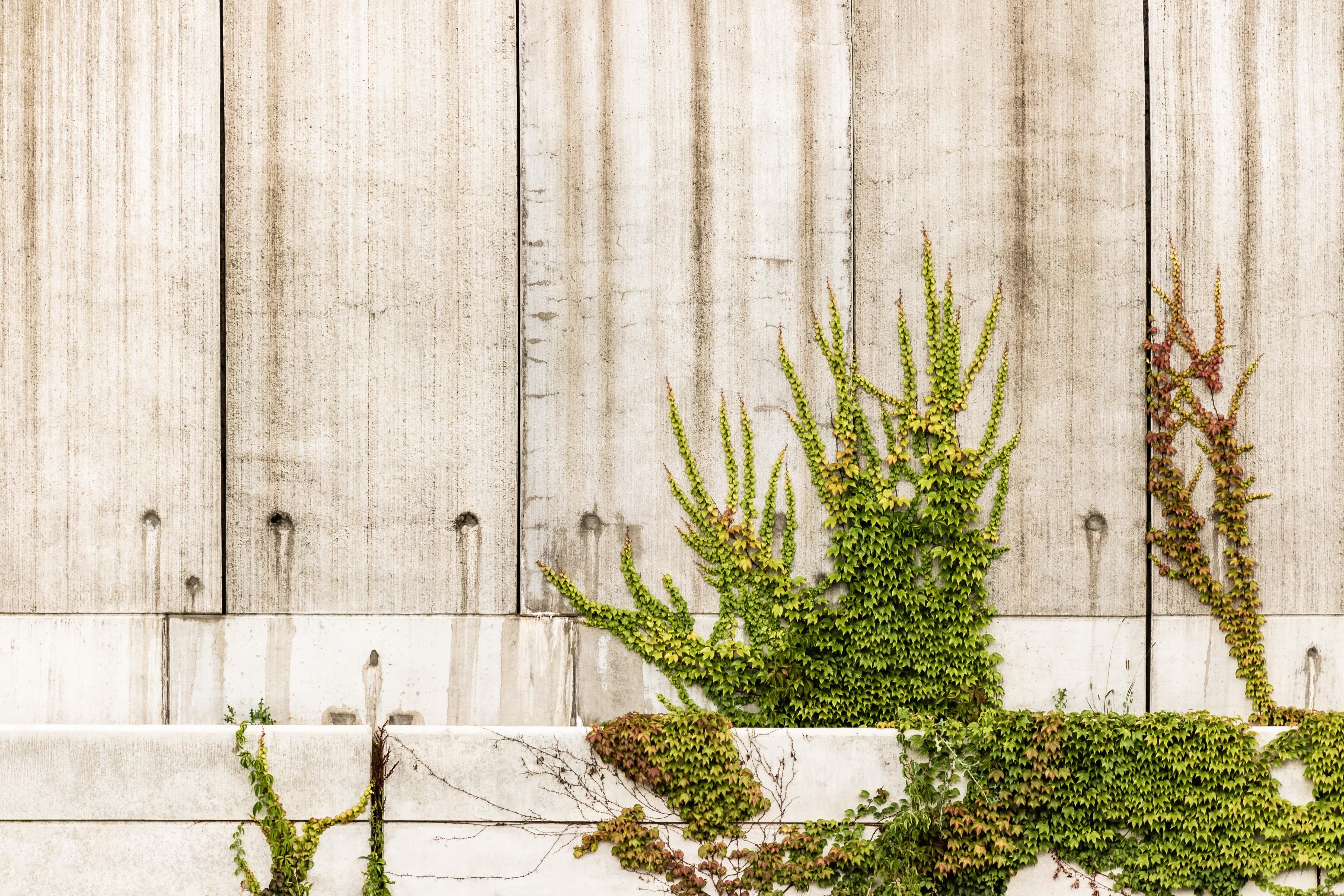 green leafed plant near wall