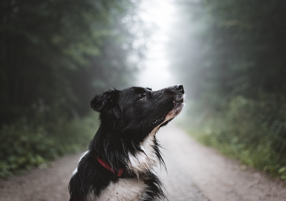 white and black dog in tree lined dirt road at daytime