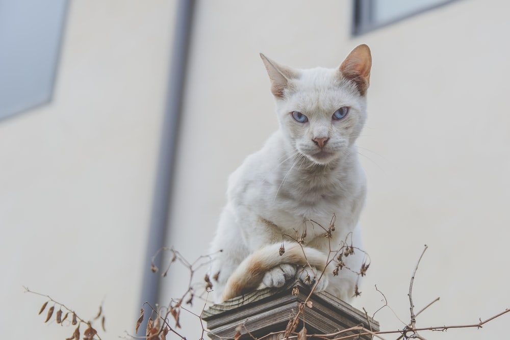 selective focus photography of white cat