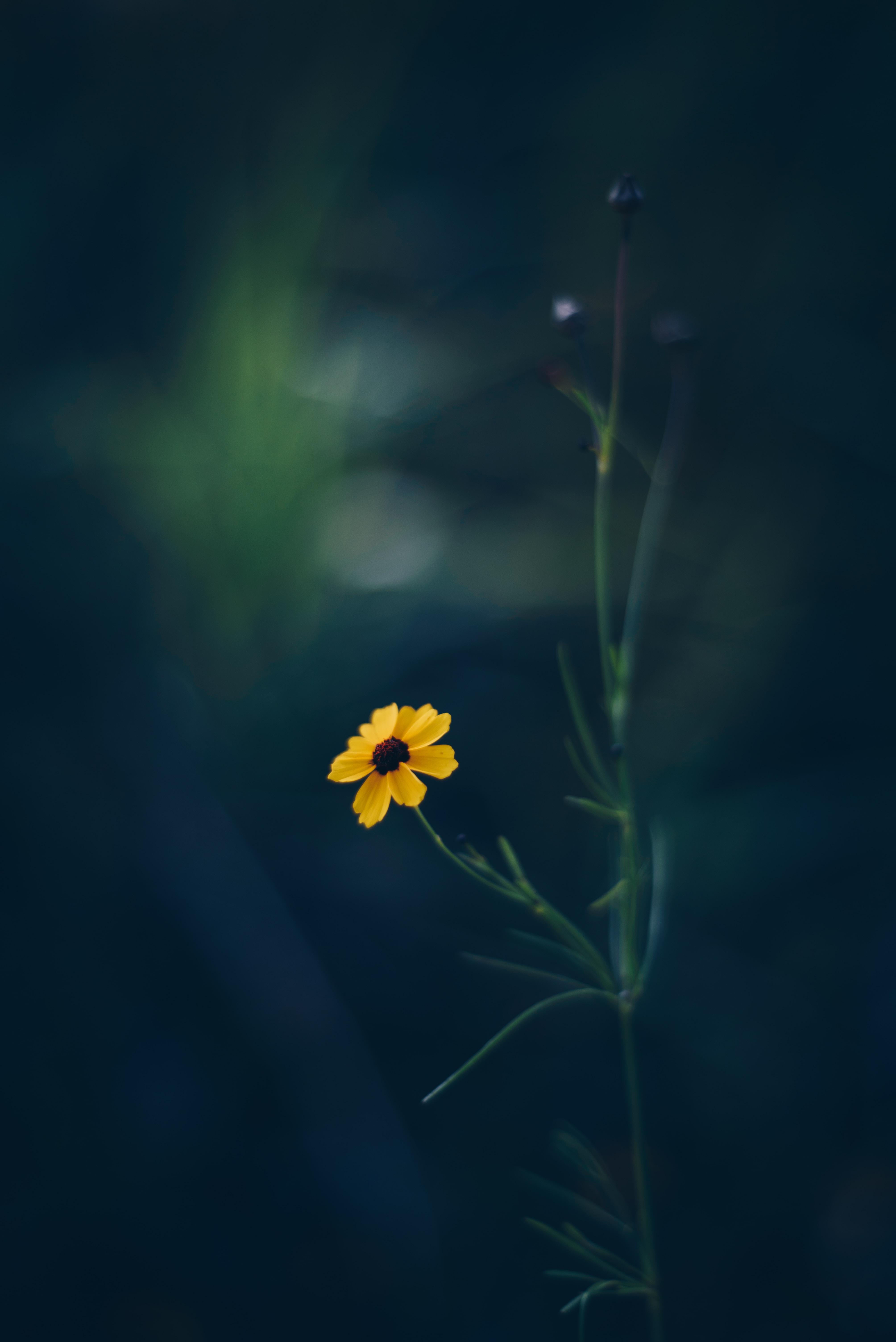yellow petaled flower closeup photography