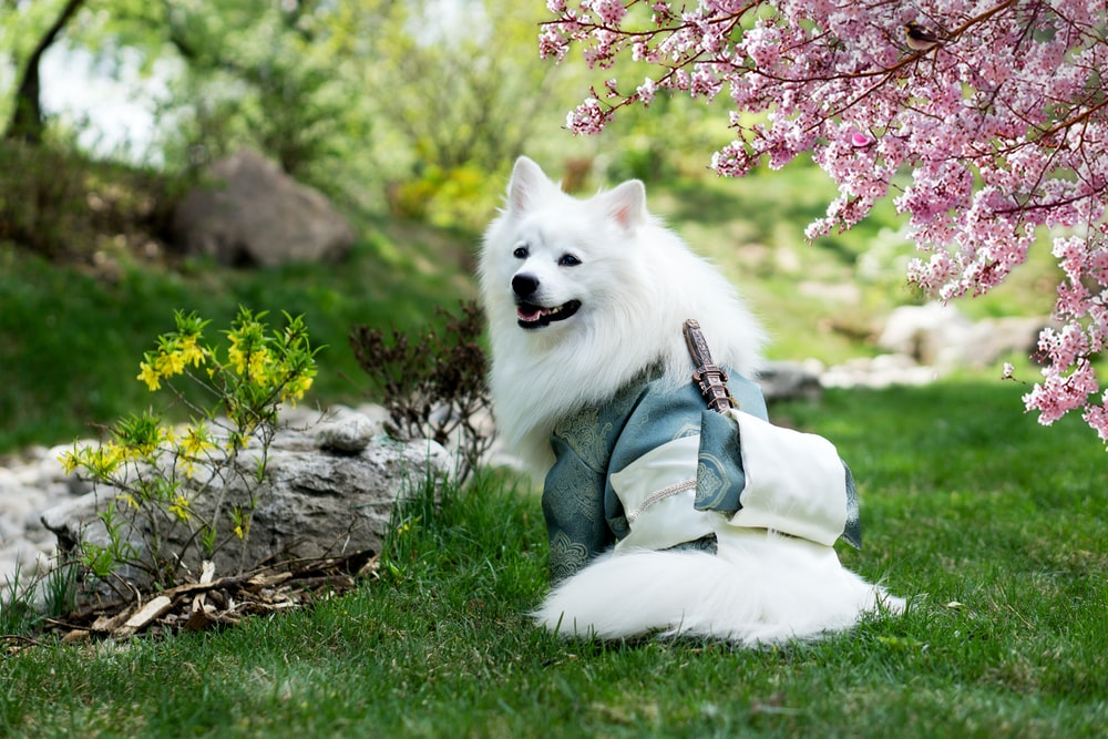 selective focus photography of long-coated white dog
