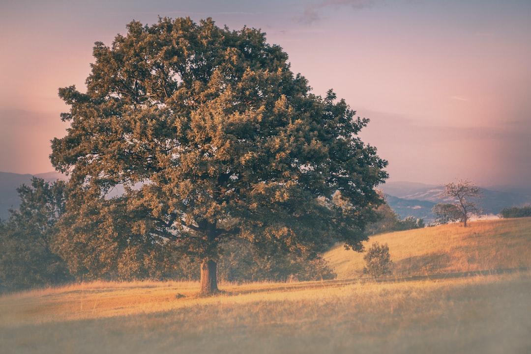 Tree on a mountain plain.