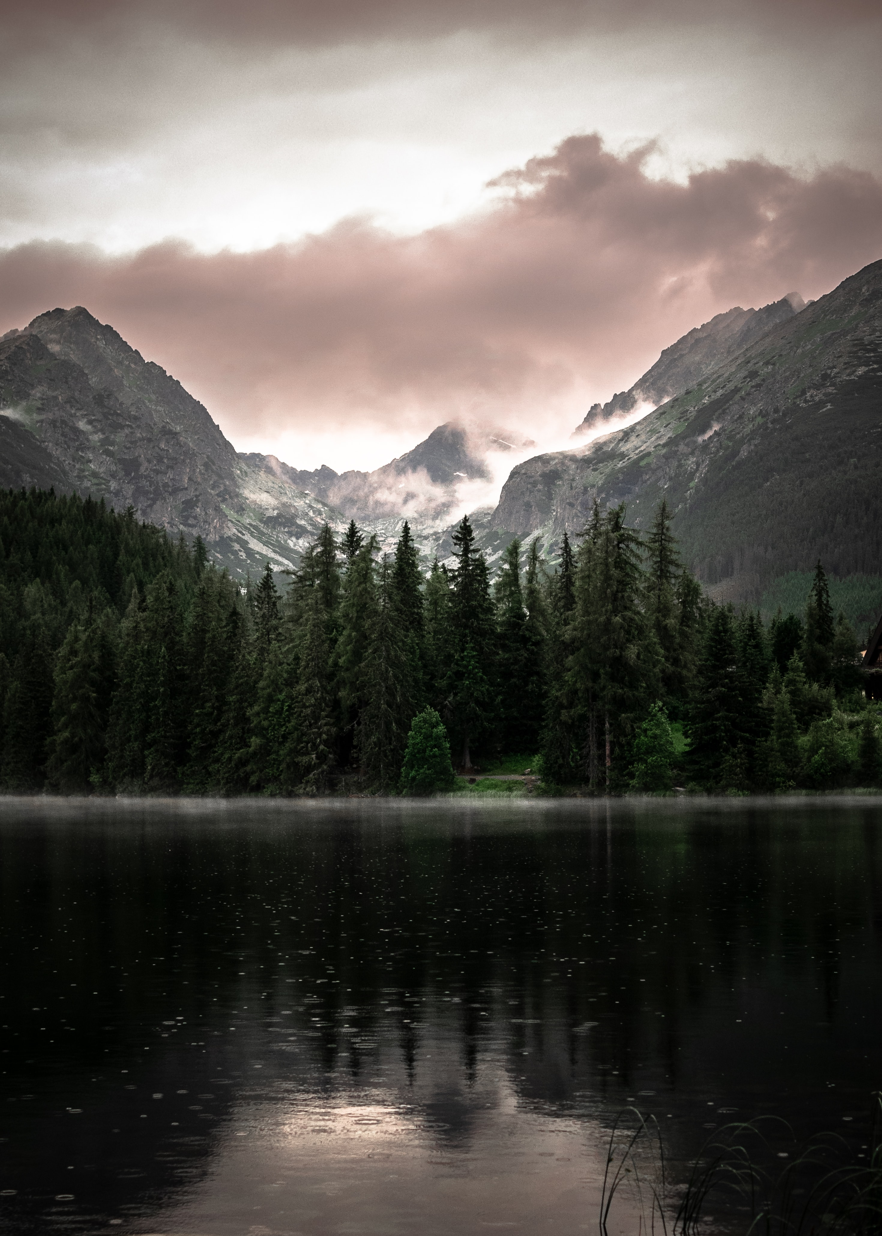 forest near lake and mountain
