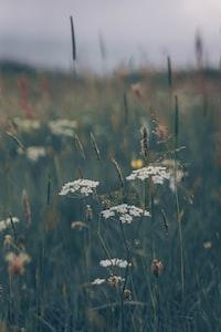 Wildflowers in the Devon countryside, UK