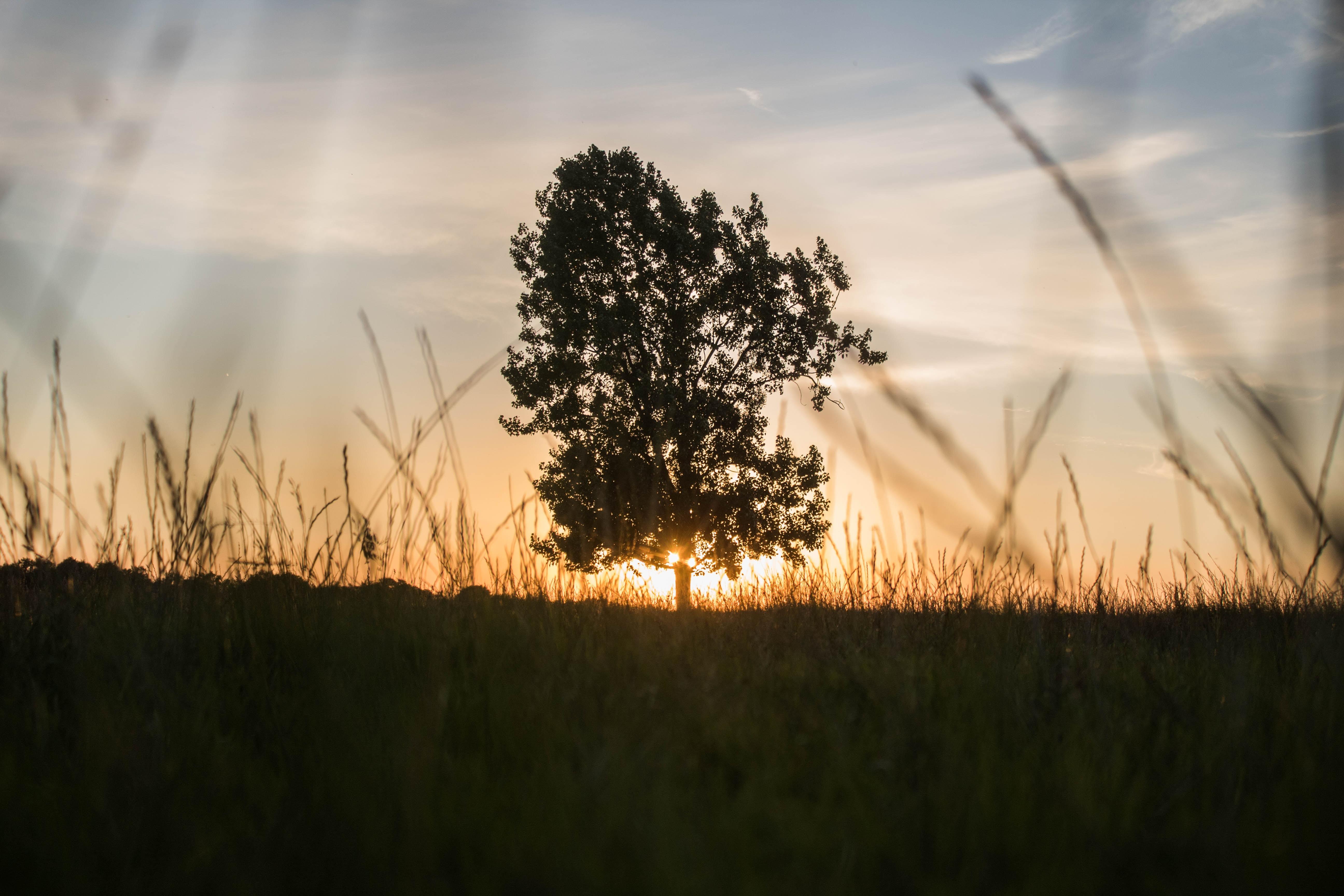 tree silhouette under golden hour