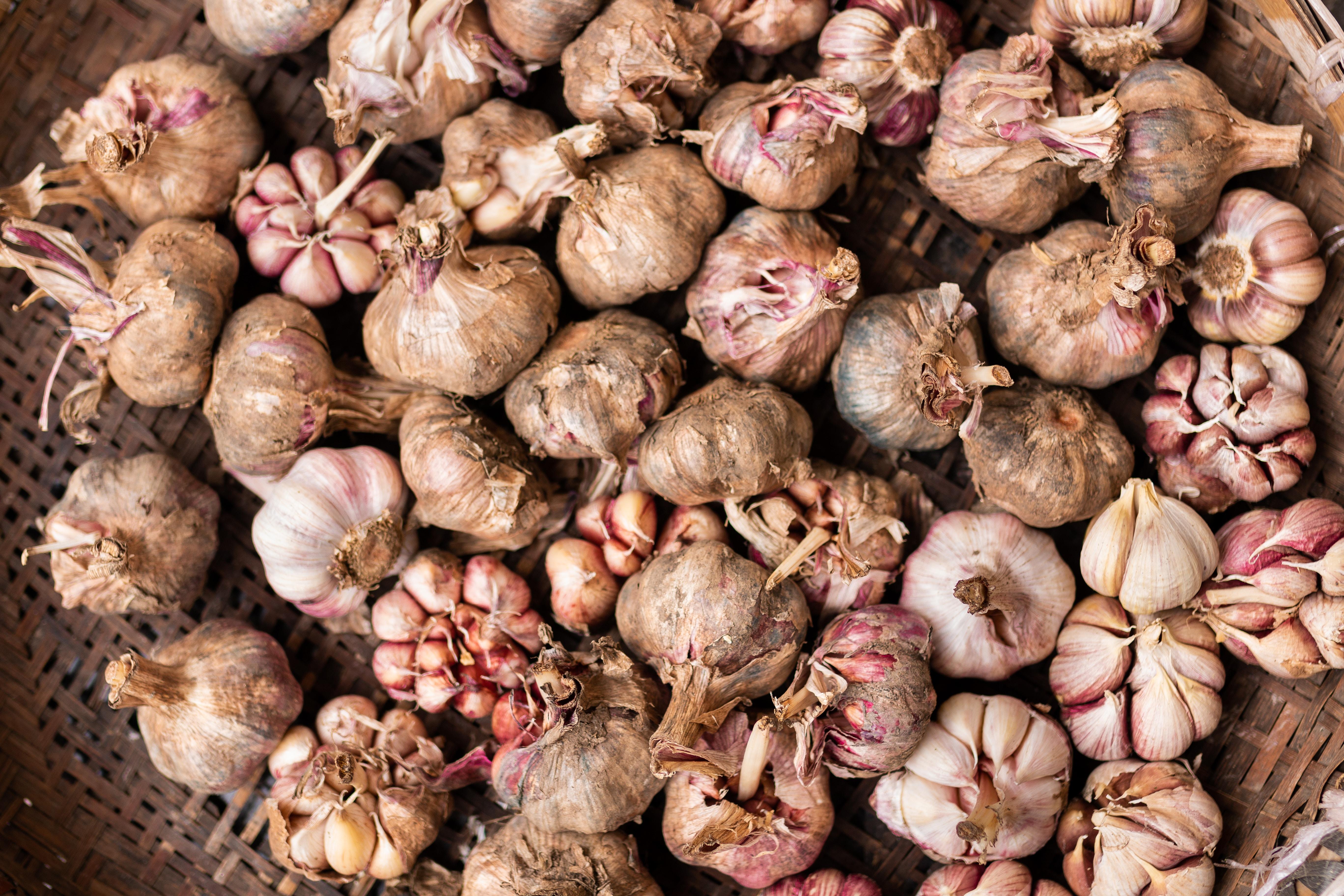 garlic lot