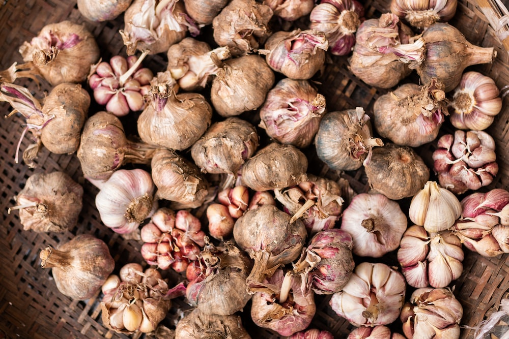 garlic lot