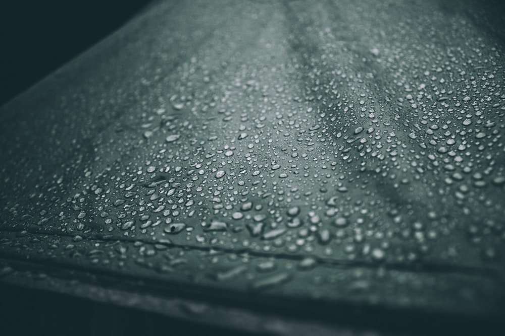 water dew closeup photography