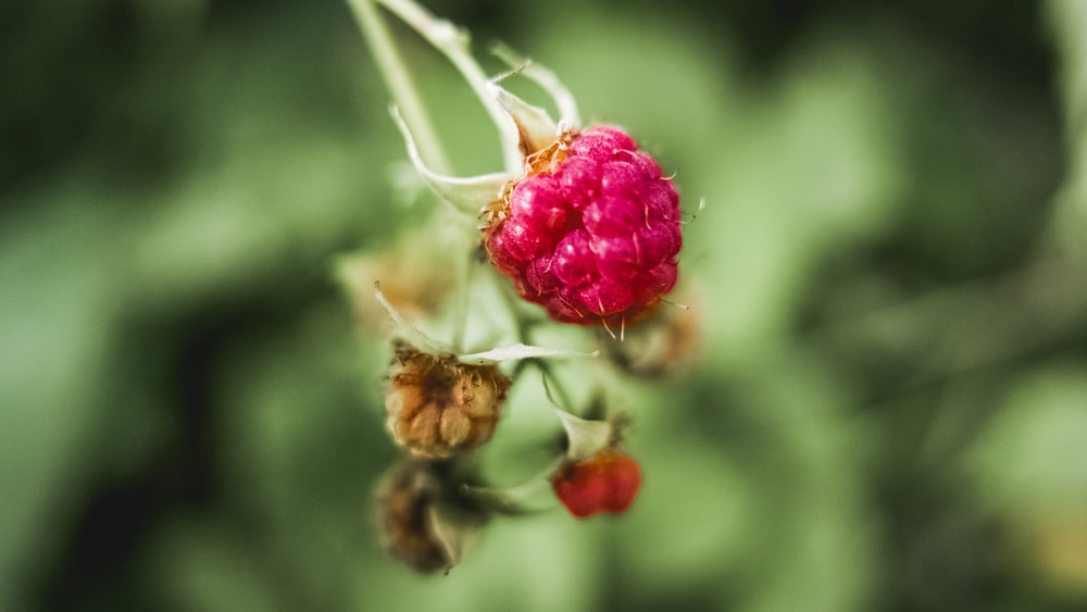 photo of red berry