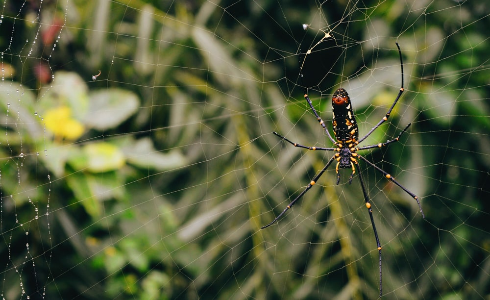 selective focus photography of black spider