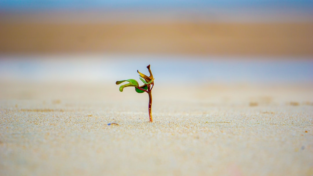 A small wild plants alone facing the waves of the Vietnam sea.  I was laying down on the beach when I saw it and love how it's standing there by itself!