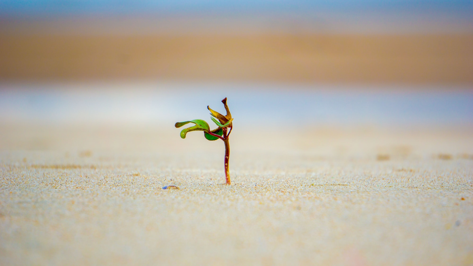 A small wild plants alone facing the waves of the Vietnam sea.I was laying down on the beach when I saw it and love how it's standing there by itself!