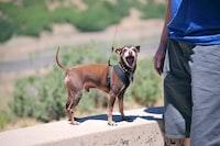 man standing holding dog leash
