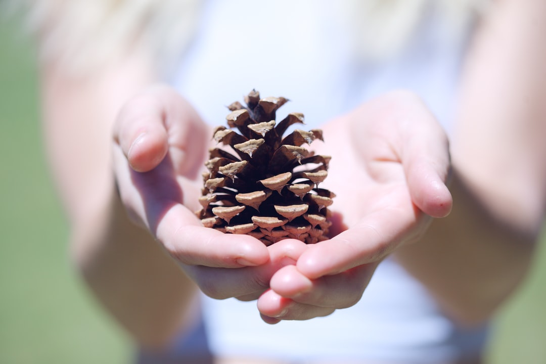 Woman holding a dried pine cone that she found at the rest area in Echo, Utah during our road trip.