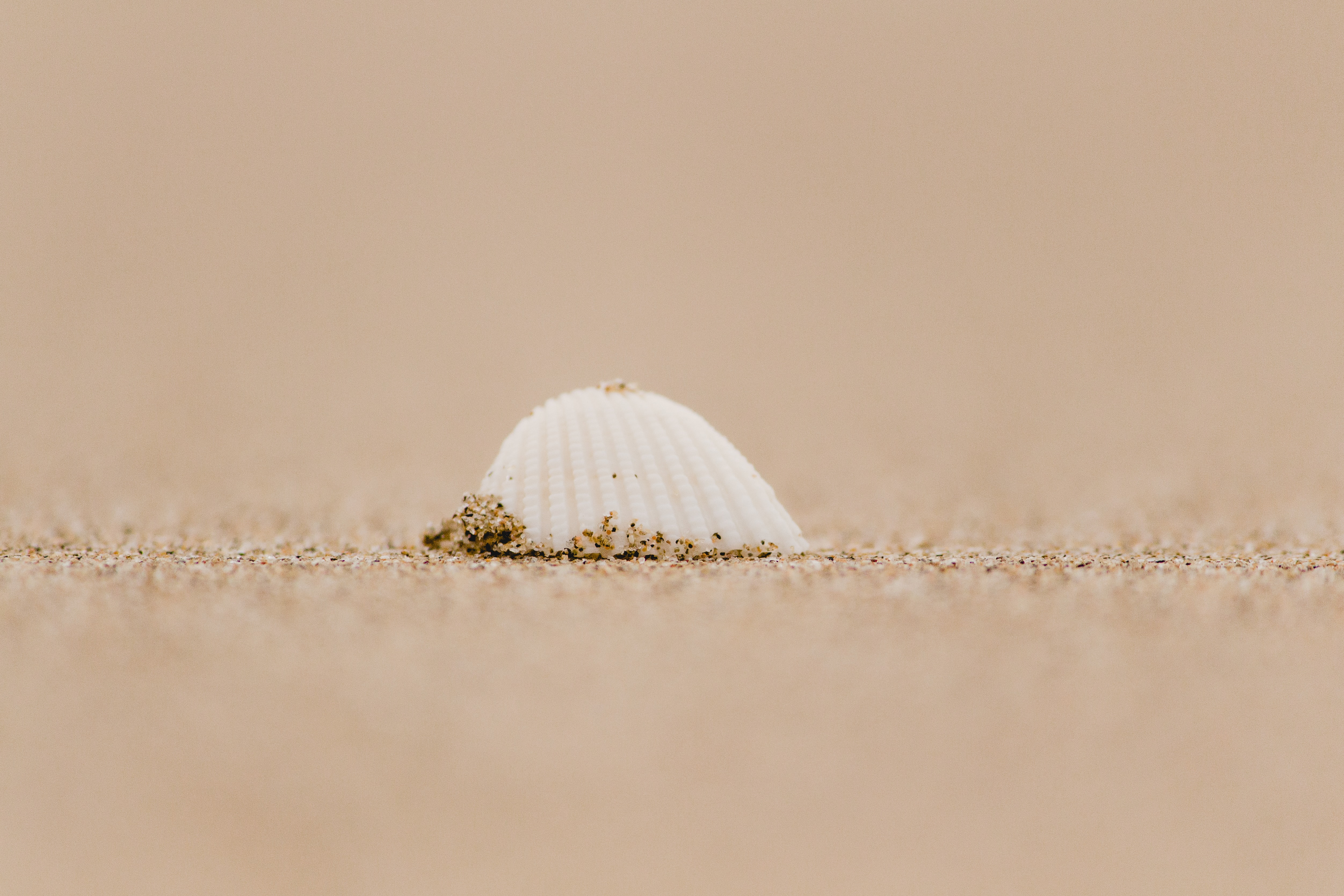 white seashell on seashore