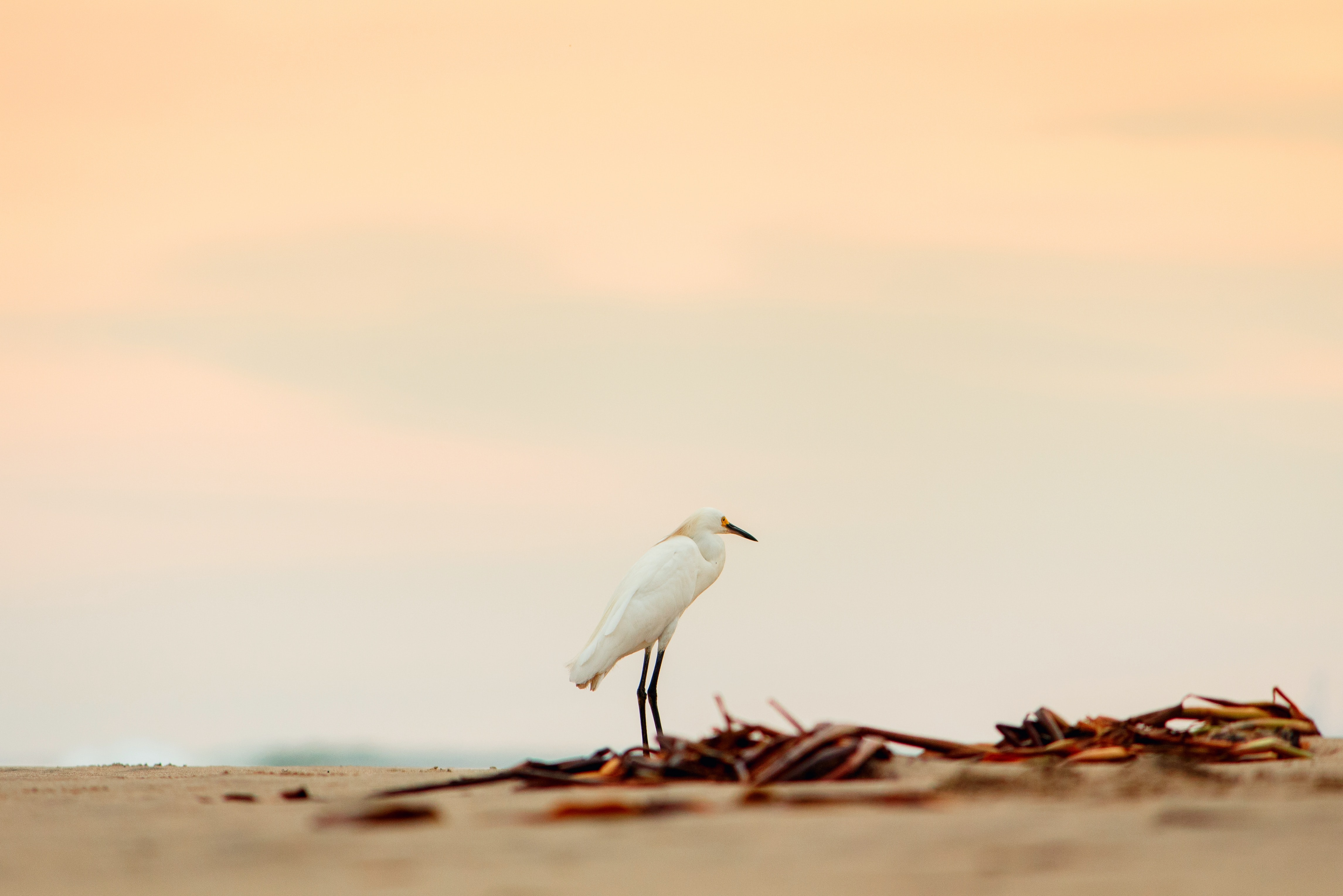 tilt shift lens photography of white bird