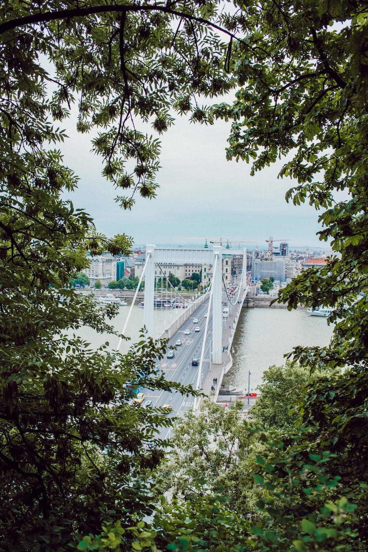 white bridge during daytime