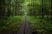 black pathway in the forest