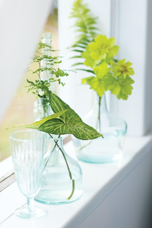 green leafed plant near the window