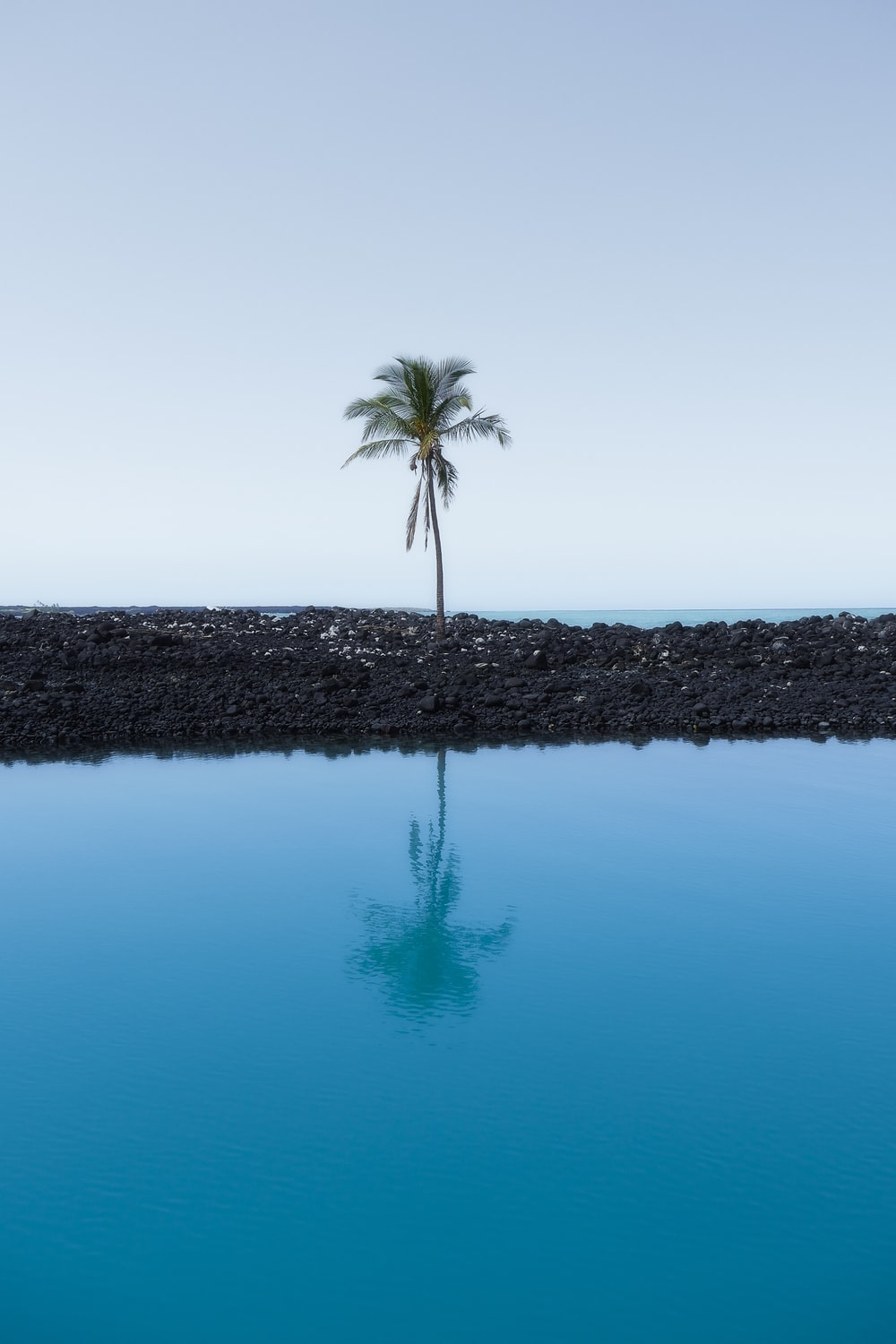 palm tree at the shore during day