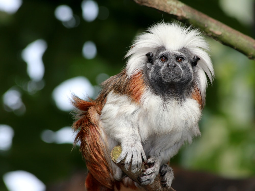 white and brown monkey sitting on the tree branch