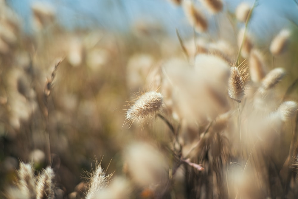 close-up photography of brown grass