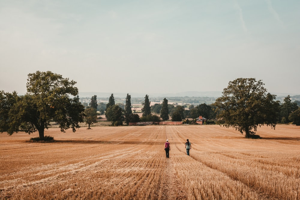 two person waling on brass grass field during daytime