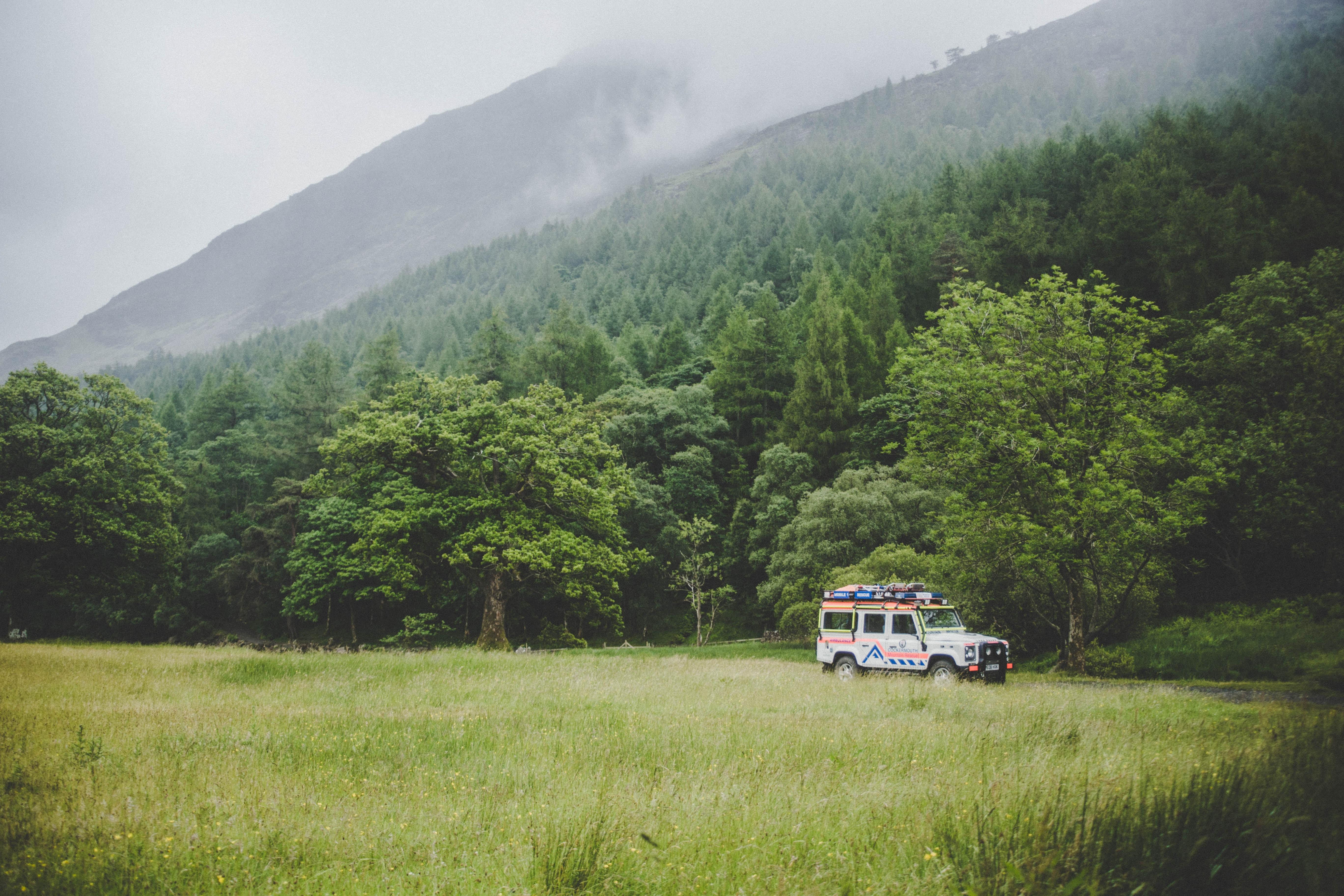 vehicle beside tree