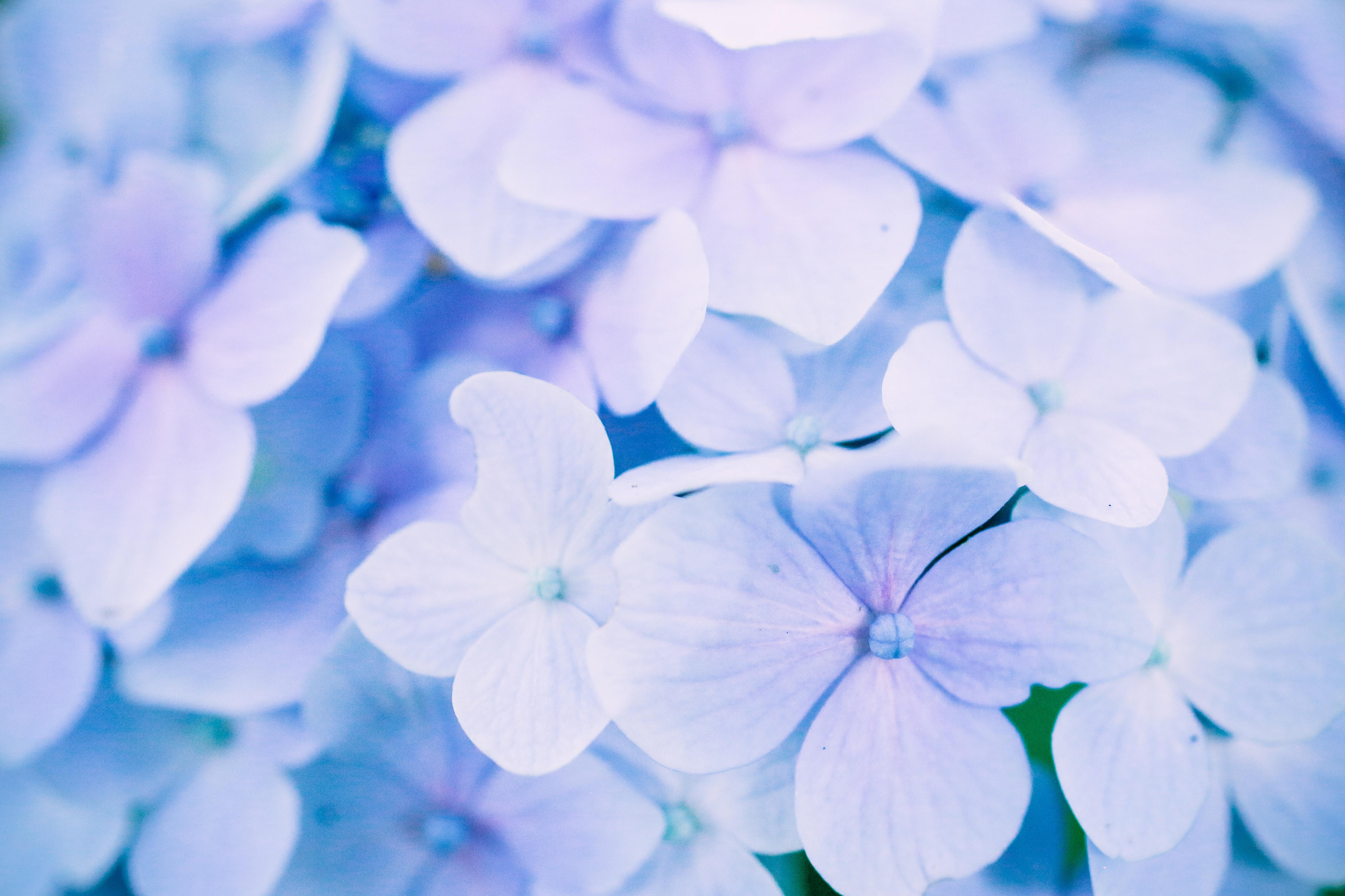 photo of purple flower lot