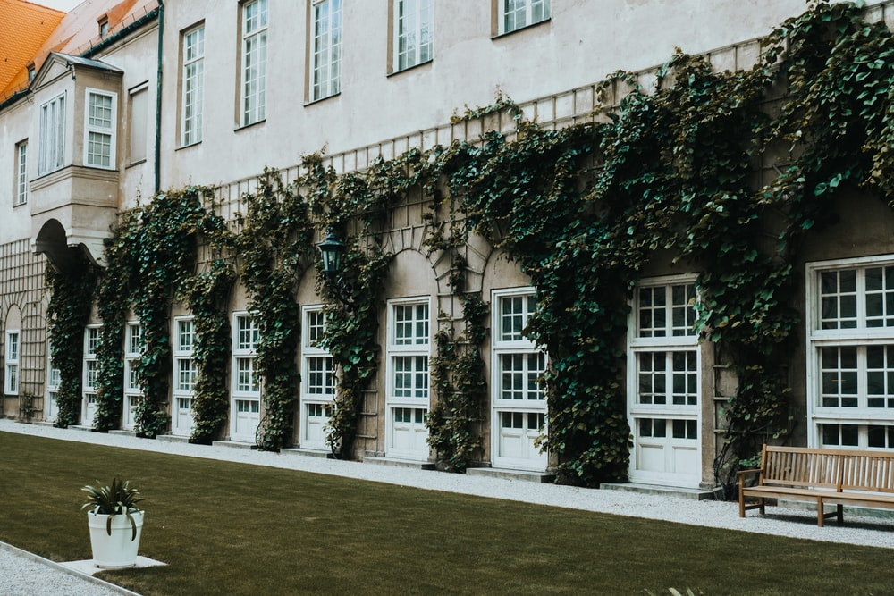 white concrete building with green ivy growing on wall